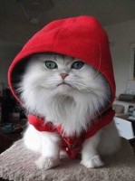 Red hoodie made for cats